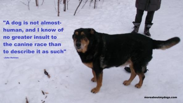 Dog Quote - John Holmes