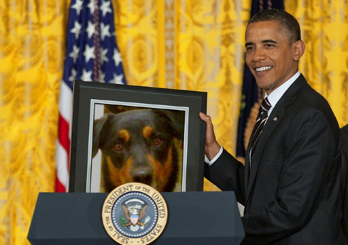 Published February 7, 2013 at 700 × 493 in Cross-Breed wins Best in