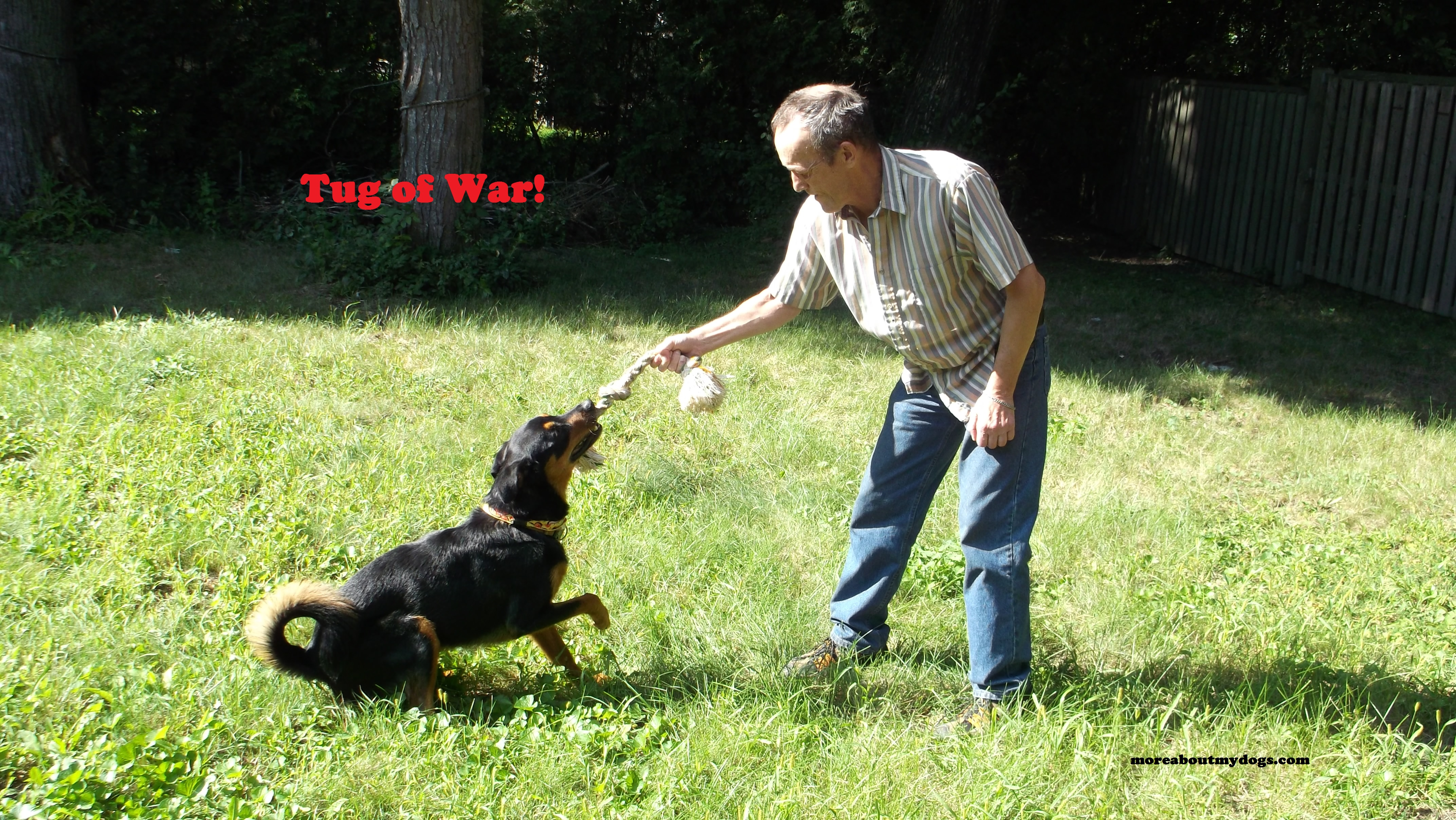 tug of war moreaboutmydogs com