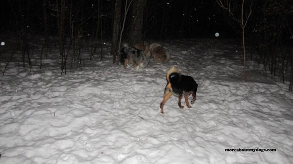 cold nignt walk 2